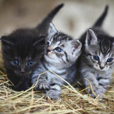 猫と自律神経