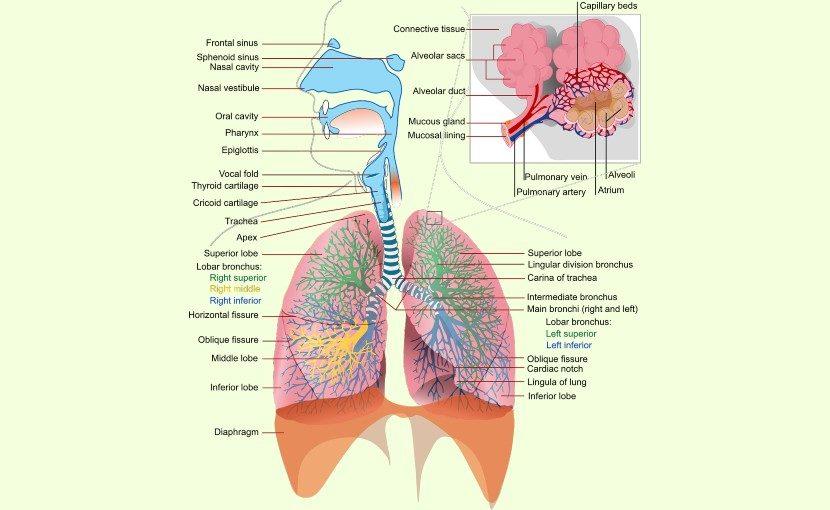 呼吸の神秘